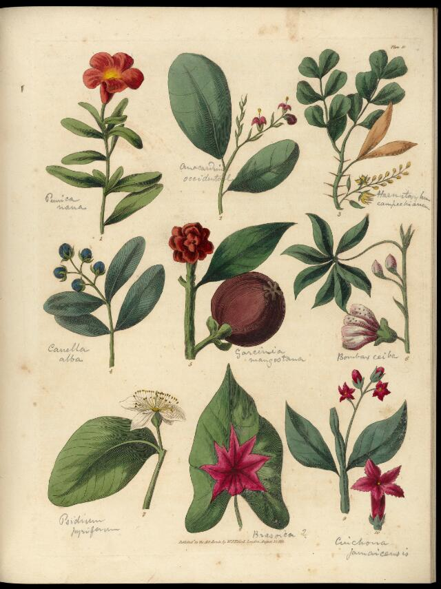 Collections search indian medicinal plants and drugs curcuma or coloured plates with a catalogue and concise and familiar descriptions of many species of new and valuable plants of the west indies and north and mightylinksfo