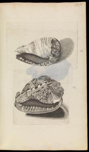 view Martin Lister, Historiae Conchyliorum. Two engravings of shells numbered 691 and 692 on page 185.
