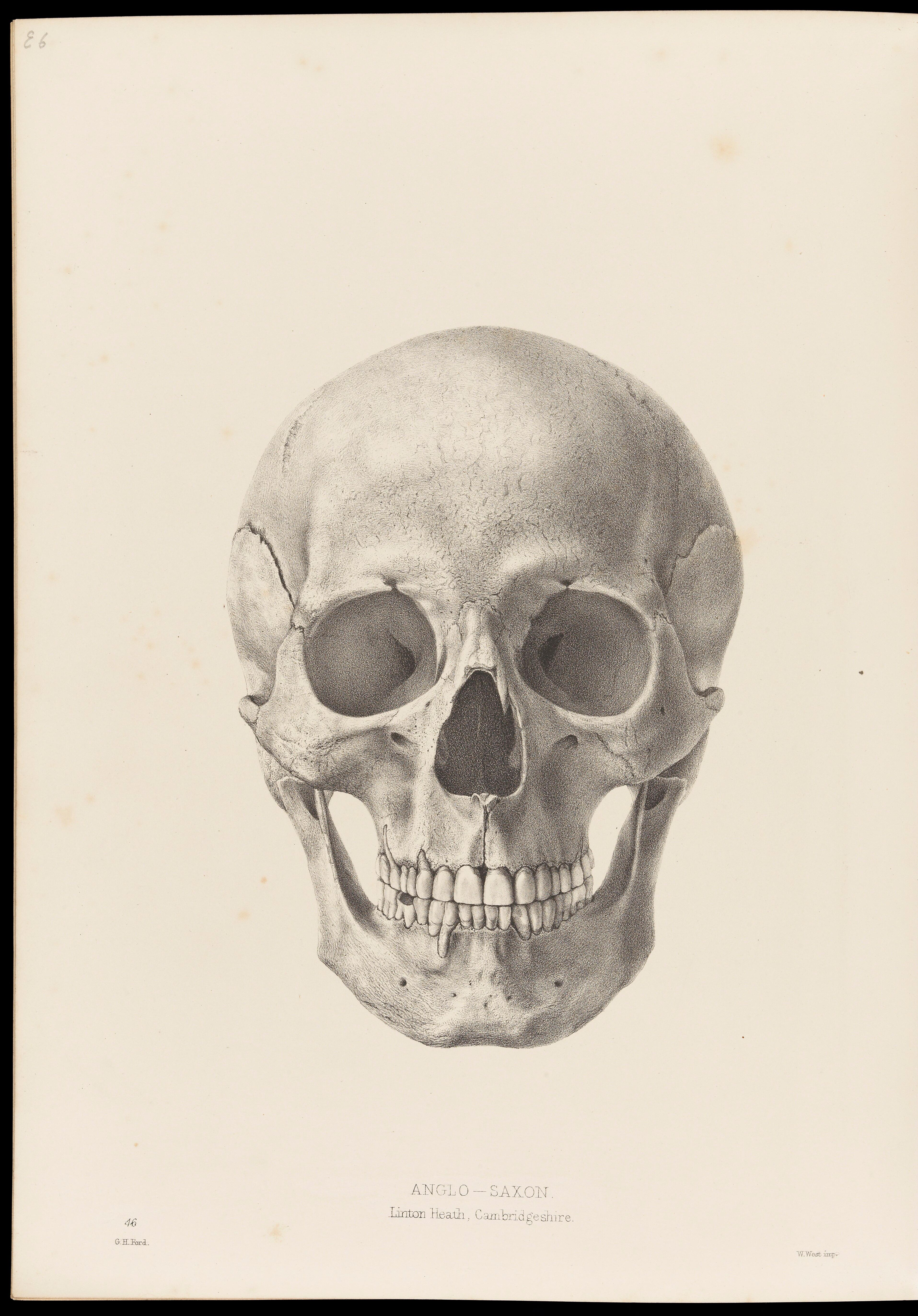 Drawing Of A Human Skull Facing Forwards Wellcome Collection