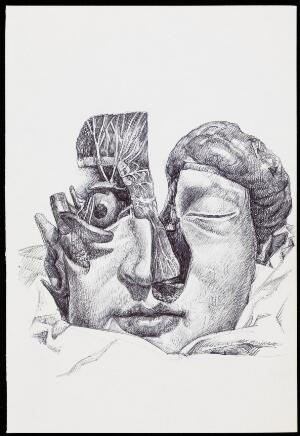 view A human head partially dissected and seen from the front. Drawing by R. Ennis, 2007.
