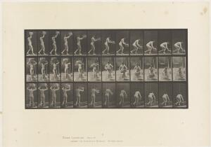 view Collotype of a woman putting a basket down, after Eadweard Muybridge, 1887.