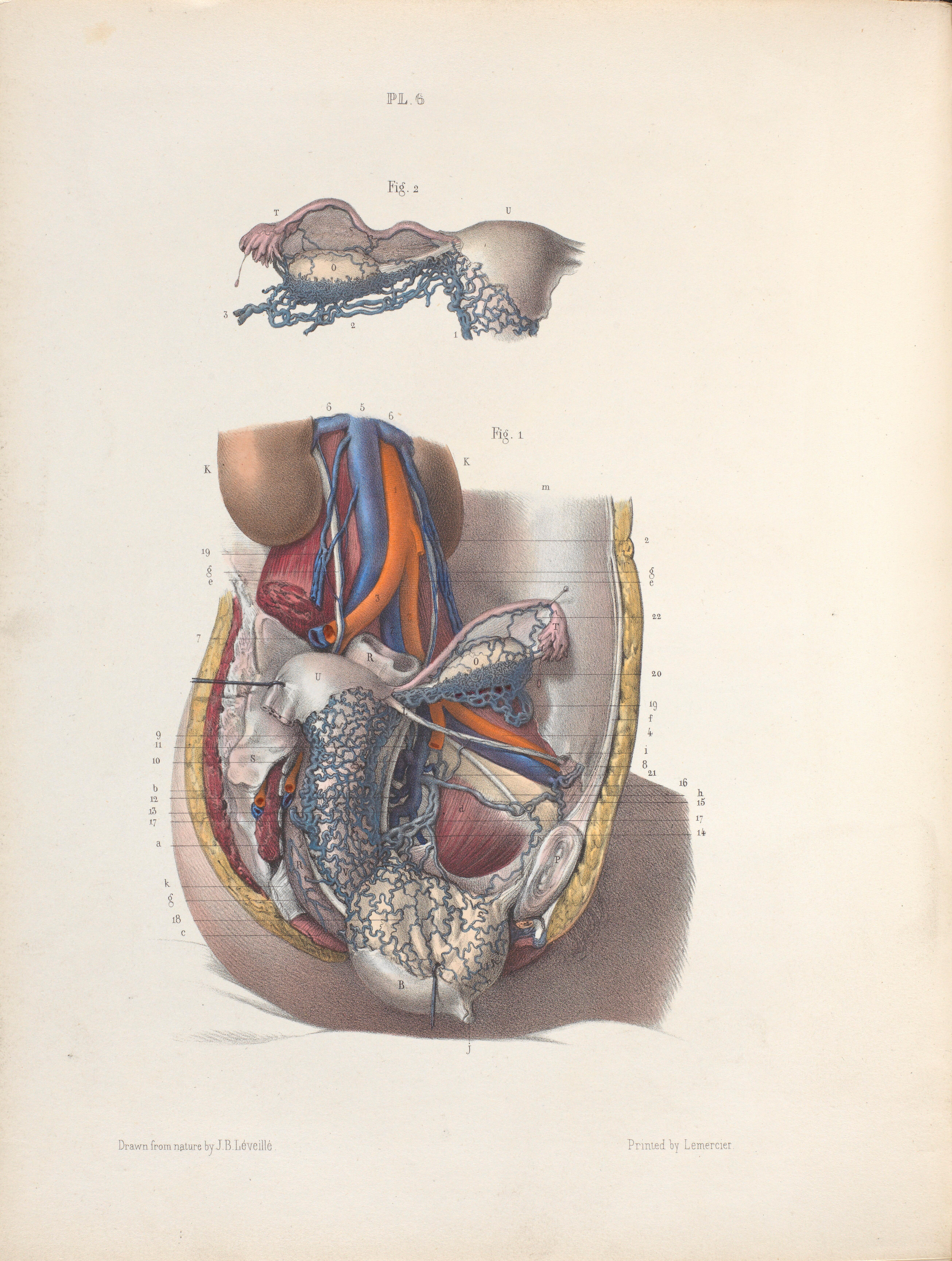 Plate Vi Anatomy Of Wellcome Collection