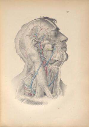 view Plate IV. Surgical anatomy of the cervical and facial regions