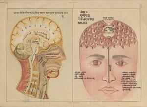 view MS Sanskrit 391. Authored by Svami Hamsasvarupa, 1900s.