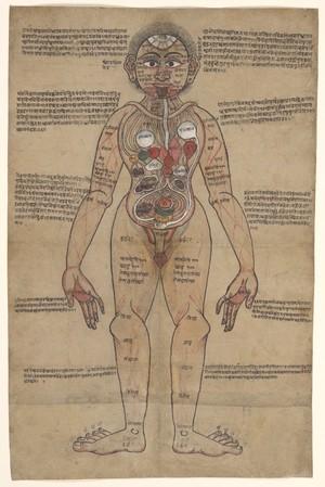 view The Ayurvedic Man, c.18th century.