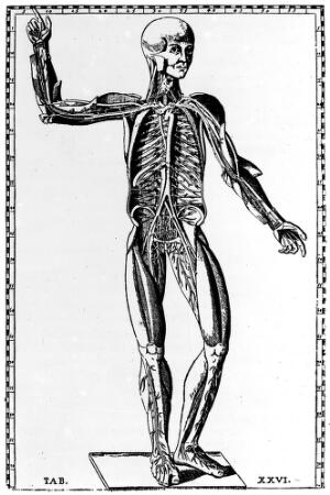 view Vascular system.