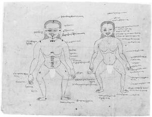 view Anatomical chart. Tibetan (?) showing two male figures.