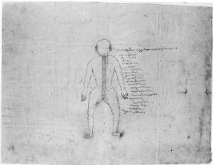view Anatomical chart. Tibetan (?).