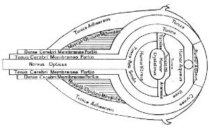 view Optical diagram of the eye with description in English.