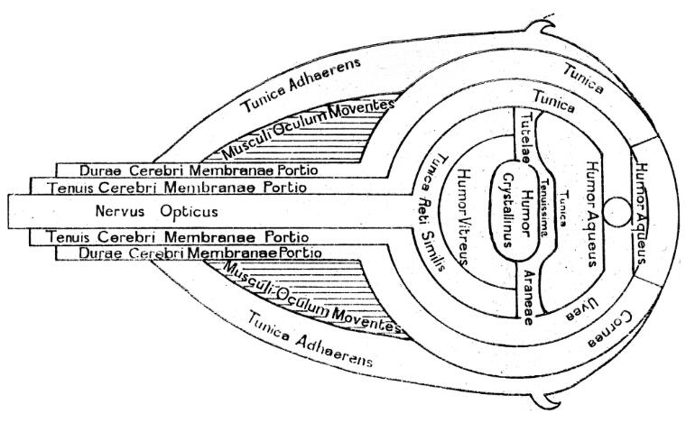 Optical Diagram Of The Eye With Description In English