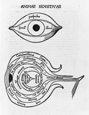 view Woodcuts: anatomy of the eye, circa 1503.