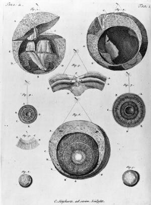 view Anatomical drawings of the eye.