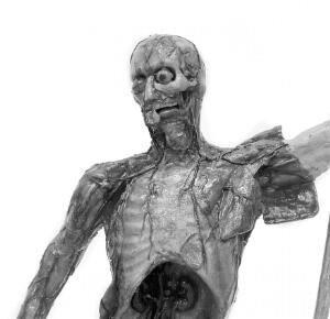 view Anatomical figure in wax.