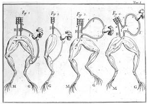 view Sciatic nerve, Galvani