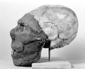 view Elongated skull for memorial head, face modelled in clay