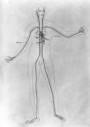 view Aristoteles Thierkunde, 1868: vascular system