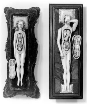 view Anatomical figures in ivory; 2 females.