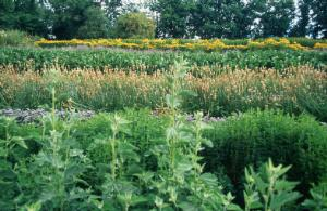 view Organic Herb Growing.