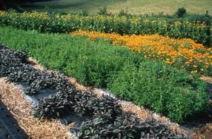 view Organic Herb Growing
