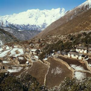 view Nepal; agriculture in the Khumbu, 1986. Pangboche (altitude 4200 metres), showing the tiny, walled terraced fields on which Sherpas cultivate their staple crops (potatoes, barley, wheat). Potatoes are rarely grown beyond 4000 metres but barley is grown at higher altitudes. Scattered juniper and birch trees share this terrain with sub-alpine grasses. Few people live permanently beyond this village amid the last scattered trees below the treeline.