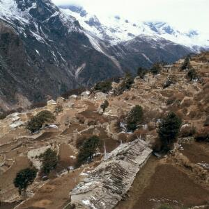 view Nepal; agriculture in the Khumbu, 1986. As N0022569C, different aspect. Pangboche (altitude 4200 metres), a view of the village with its walled, terraced fields. The houses are built with their backs to the mountain. Only the fronts have windows and doors.