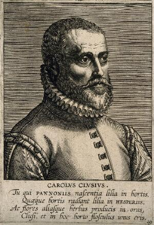 view Charles de l'Ecluse [Clusius]. Line engraving by P. Galle, 1595.