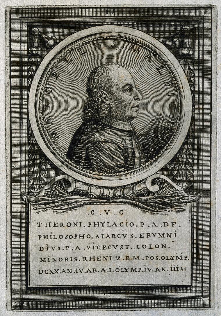 Marcello Malpighi  Line engraving by [C  P  I ]  | Wellcome Collection