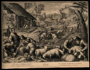 view Sheep are sheared and wheat is reaped; representing summer. Etching, 17--, after F.G. Bassano the younger.