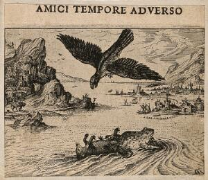view A bird of prey prepares to swoop on a mouse and a frog in water; illustrating Aesop's fable of the frog and the mouse. Etching by C. Murer after himself, c. 1600-1614.