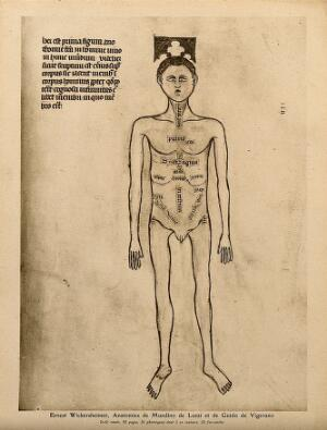 view A male nude with the parts of the abdomen and thorax labelled. Colour process print, 1926, after a manuscript illustration, 1345.