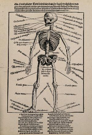 view A human skeleton, seen from the front, with labels giving the latin names of the bones. Photograph after a woodcut after Hans Wechtlin, 1517.
