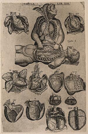 view Two figures with their thoracic cavity exposed, one dissecting the other (figs I-II), together with illustrations mainly of the heart (figs III-XI) and two of the lungs (figs XII-XIII). Engraving, 1568.