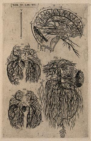 view The vascular and arterial system of the human brain (II), the pulmonary artery (III), the venal artery (IIII) and the portal system of veins (I). Engraving, 1568.