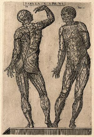 view Two male figures, seen from the front and back, with the cutaneous veins of the human body displayed. Engraving, 1568.