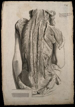 view Muscles of the back and shoulder. Engraving after G. de Lairesse, 1739.