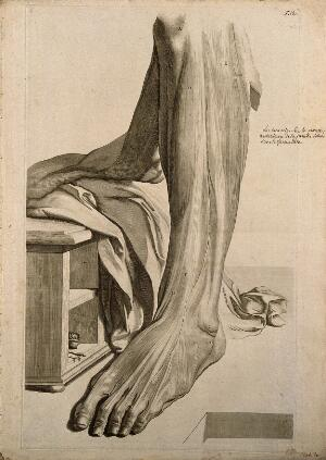 view The muscles of the lower leg. Engraving after G. de Lairesse, 1739.