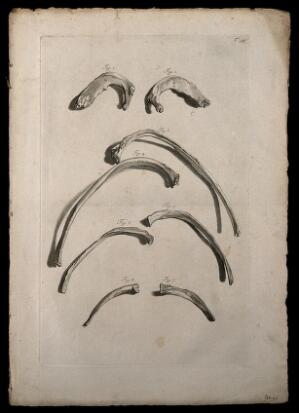view The ribs. Engraving after G. de Lairesse, 1739.