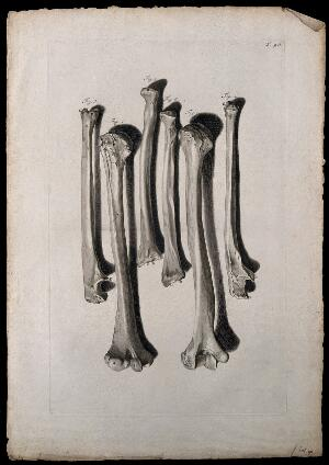 view The bones of the arm. Engraving after G. de Lairesse, 1739.