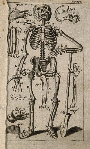 view A human skeleton, seen from the front and leaning on a spade, surrounded by illustrations of individual bones. Engraving, 1686.