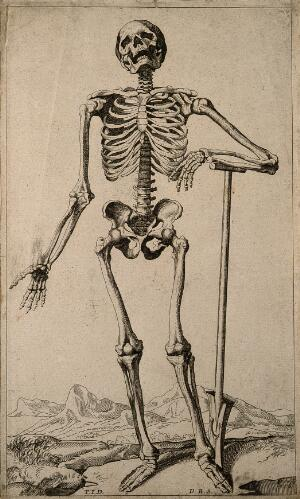 view A human skeleton, seen from the front, resting the bones of his lower left arm on a spade handle. Engraving by D. M. Bonaveri, ca. 1685/1690 after a woodcut, 1543.