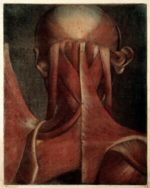 view Muscles of the head, neck and shoulders. Colour mezzotint by J. F. Gautier d'Agoty after himself, 1745-1746.