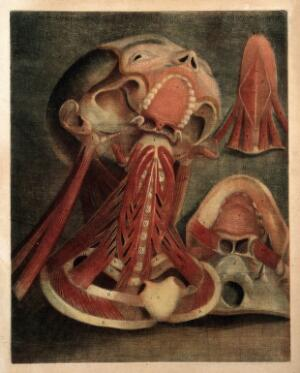 view Muscles of the neck, tongue and jaws. Colour mezzotint by J. F. Gautier d'Agoty after himself, 1745-1746.