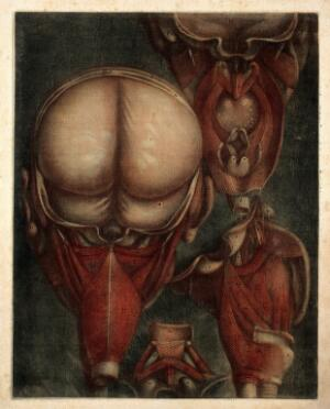 view Muscles of the pharynx, viewed from the back and side, and separated. Colour mezzotint by J. F. Gautier d'Agoty after himself, 1745-1746.
