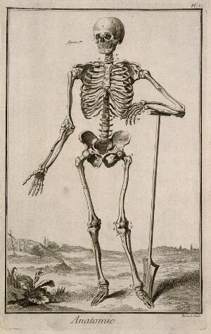 view A human skeleton, seen from the front, resting the bones of his left forearm on a spade handle, after Vesalius. Engraving by Benard, late 18th century, after a woodcut, 1543.