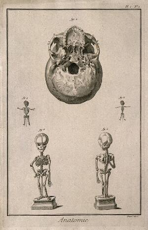 view The base of the skull and foetal skeletons of different ages. Engraving by Benard, late 18th century.