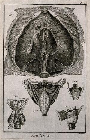 view The diaphragm (fig. 1) after Haller, the pharynx, seen from the back and the larynx seen from the front (figs 2-3), after Duverney, and the larynx seen from the back and open and from the side (figs 4-5), after Eustachius. Engraving by Benard, late 18th century.