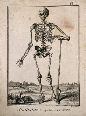 view A human skeleton, seen from the front, resting the bones of his left forearm on a spade handle, after Vesalius. Engraving by Benard, 1779, after a woodcut, 1543.