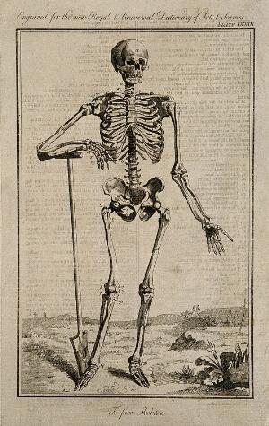 view A human skeleton, seen from the front, resting the bones of his left forearm on a spade handle, after Vesalius. Engraving 1769, after an engraving by Prevost, 1762, after a woodcut, 1543.