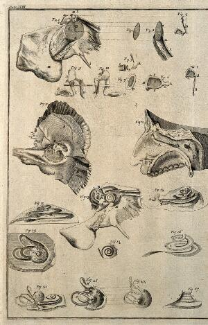 view The bones of the ear and of hearing. Etching, 1743.