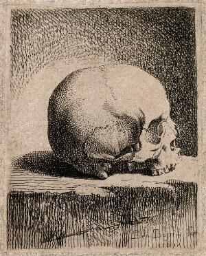 view Skull: lateral view. Etching by B. Bossi, 1760.